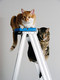 Ladder_cats